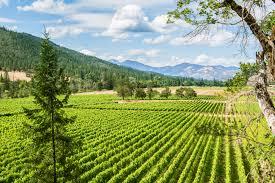 ycf wine country